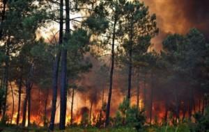 Haiti: Feu de forêt dans le monde, la Forêt des Pins n'est pa épargnée