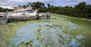 Monde: Des algues bleu-vert absorbent l'eau le long des plages du sud de la Floride