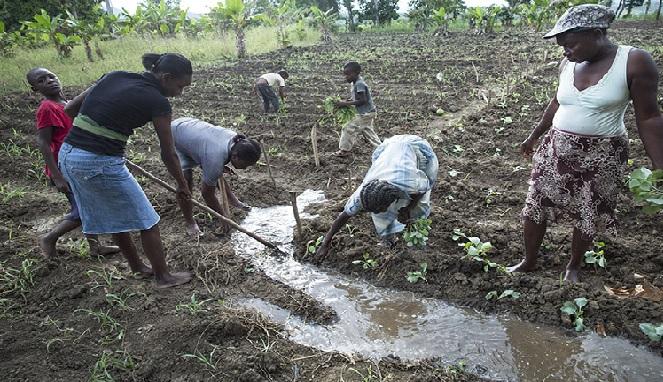 Haïti: La Banque Mondiale annonce un financement additionnel de 7.75 millions de dollars pour l'agriculture