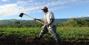 Haiti: De la nécessité de produire en Haïti, aujourd'hui