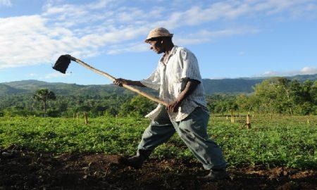 Agriculture-Haiti