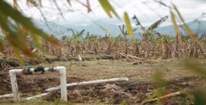 Haiti: Le projet Agritrans, un véritable champ de ruines surveillé de près par des gardiens