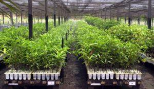 Haiti: Lancement d'un ambitieux projet de plantation de 20 millions d'arbres