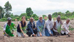 Haiti: Relance de la culture du coton par la marque Timberland