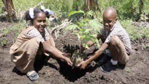 Plantules-reboisement-élèves