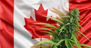 Monde: Le cannabis officiellement légal le 17 octobre au Canada