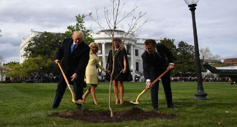 Monde: L'arbre planté par Macron et Trump à la Maison Blanche est mort